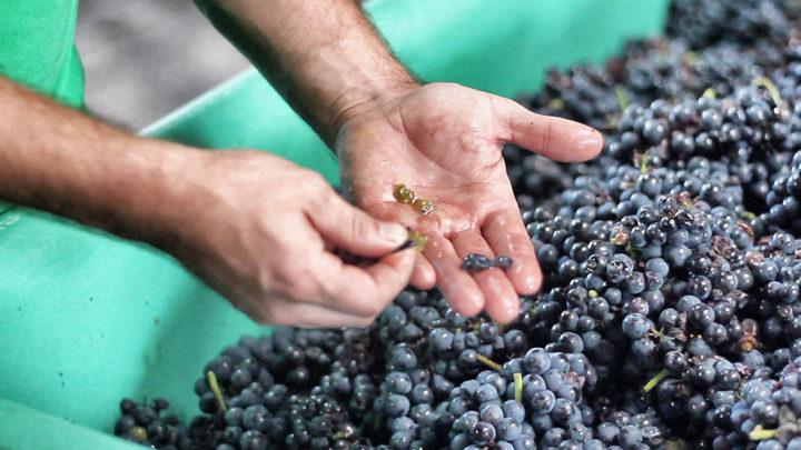 Mit dem Interesse am Wein erwacht oft auch die Neugier auf die Herstellung.